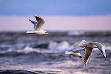 Vögel an der Ostseeküste in Boltenhagen
