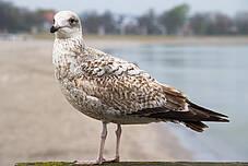 Vogel an der Ostseeküste in Boltenhagen